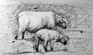 ..and then there was the time I drew some sheep by carriehowarth
