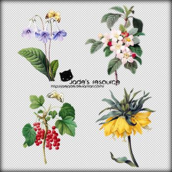 20121006_flowers_png by JaeJade