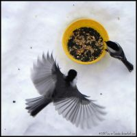 I think they liked my seeds by Lou-in-Canada
