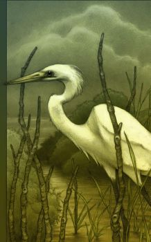 Egret..in color by CopperAge