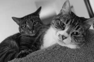 Les Chats by LunarLuminosity
