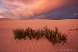 Metallic Skies by hougaard