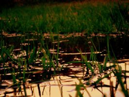 The Water Between the Grass by Zilch17