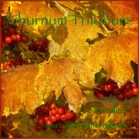 Another herbal page: viburnum by muffet1