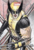 Marvel Universe - Wolverine Sketch Art Card by DenaeFrazierStudios
