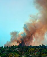 ForestFires by DylanStricker