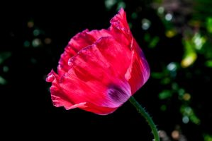 A Flower For You by Bazz-photography