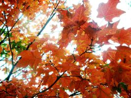 Fall Leaves by sweetmisery11
