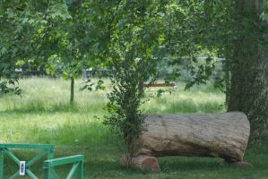 Cross Country Log Tree Branch by LuDa-Stock
