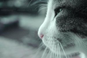 MeowIII by swansong77