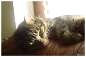 a cat's life by sofille