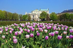 Burgtheater and Tulips by AgiVega