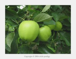 Apples by child-prodigy
