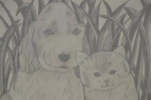 dog and cat. by johanna69