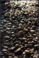 Pebbles in the puddle by realny