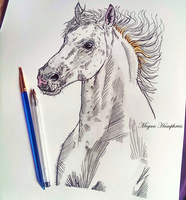 White Horse by stardust12345