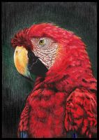 Parrot by 3Tallulah