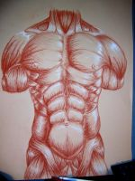 Muscle drawing for college by CamT