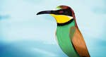 Bee-eater by NoraYahya-95