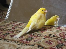 Canary 2 by Emane1983