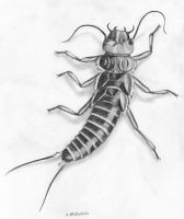 Stonefly (Plecoptera, I'm told) by arnivore