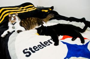 Kitties Love the Steelers by jimloomis