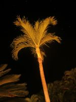 Palm at Night by LyndellLee