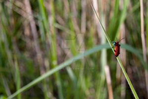 Red Insect by p0piete