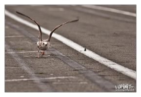SA140 ready for takeoff by Lupinicious