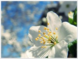 Blossoming 2 by moonik9