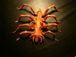 sea spider by palaeorigamipete