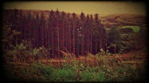 Forest Poetry 9 by vigrid88