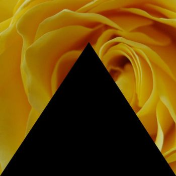 Black Triangle and Yellow Flower by ranbassi