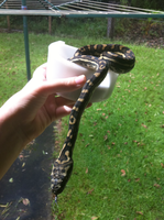 Snake in a Cup by Servaline