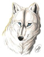.:The White Wolf by FallenAngelWolf13