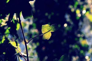 Leaf falls in love with sun by soannie