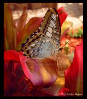 Butterfly House I by Jenna-Rose
