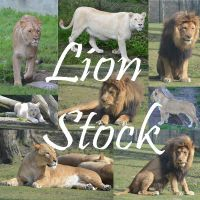 Lion Stock by Nikki-vdp