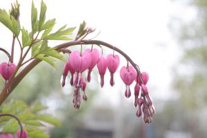 bleeding hearts by shadoe-gary-paul