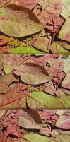 High Res Stained Leaf Textures by sdwhaven