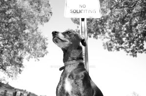 No Soliciting by hansoloqt