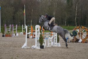 Grey Horse - Show Jumping Stock 8.19 by MagicLecktra