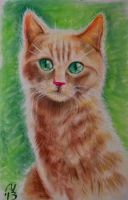 Cute Lil Kitty by philippeL