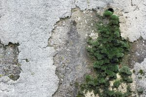 Moss on Concrete 1 by fatgeekuk