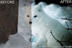 Snow Fox Lightroom Preset by hfootball