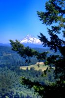 Mt. Hood and Fir by Sidneys1