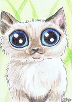 ACEO Funny cat Kitten Breeds Himalayan by KingZoidLord