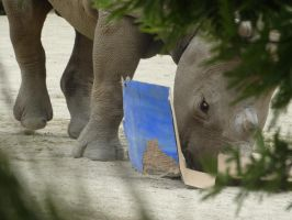 Baby Rhino and his/her box by Ryujin086