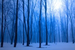 Winter Forest by VFrance