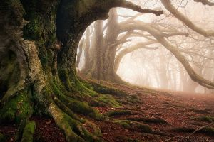 Mystery Keepers by FlorentCourty